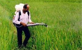 سموم کشاورزی برنج